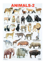 Dreamland Animals Chart 2