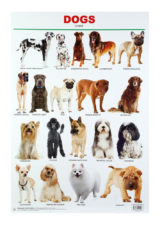 Dreamland Dogs Chart