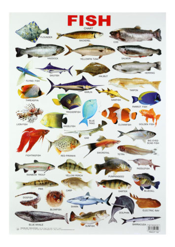 Buy Dreamland Fish Chart Online In India Kheliya Toys