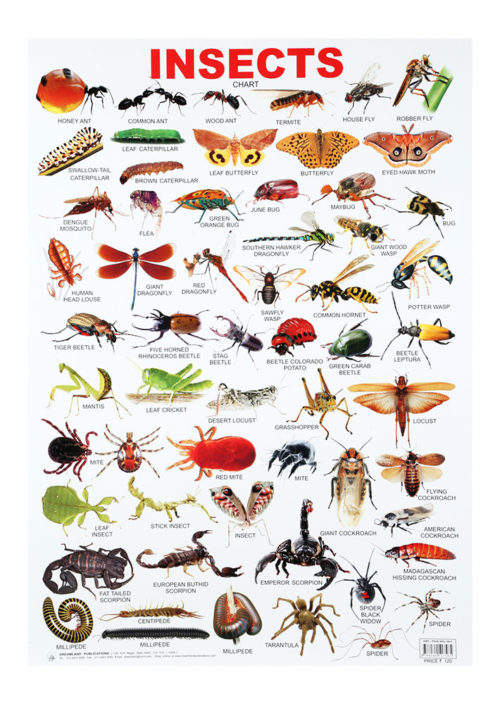 Dreamland Insects Chart