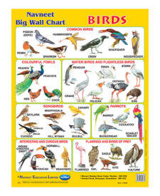 Navneet Birds Big Wall Chart