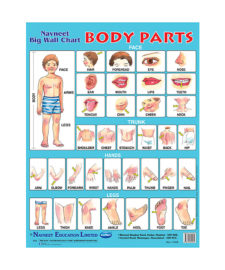 Navneet Body Parts Big Wall Chart