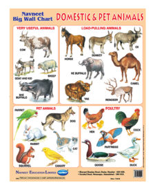 Navneet Domestic & Pet Animals Big Wall Chart