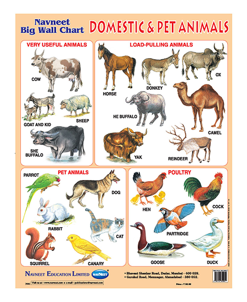 Domestic Animals Chart on Farm Animal Worksheets