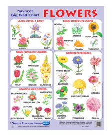 Navneet Flowers Big Wall Chart