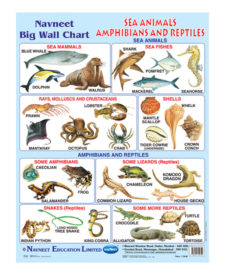 Navneet Sea Animals, Amphibians & Reptiles Big Wall Chart