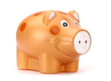 Speedage Piggy Bank Popular - Golden