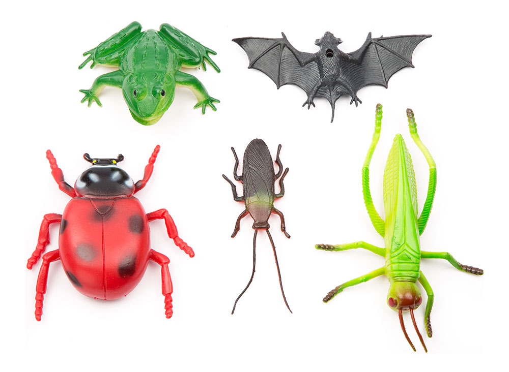 Buy Natural World 6pc Insects Hb9862 Online In India
